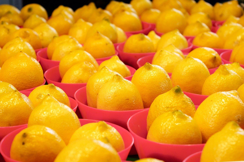 Lemons at the Marché Jean-Talon in Montréal, Quebec, Canada